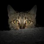 cat-1690799_1920